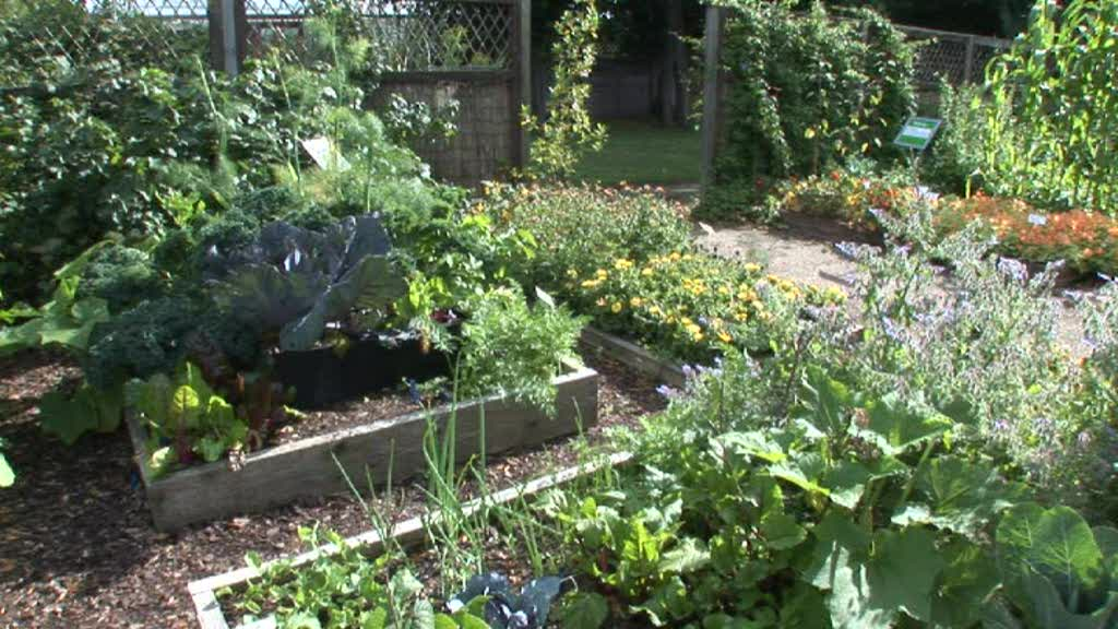 Vegetable Gardens: Spring 2011