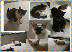 Uns gatinhos