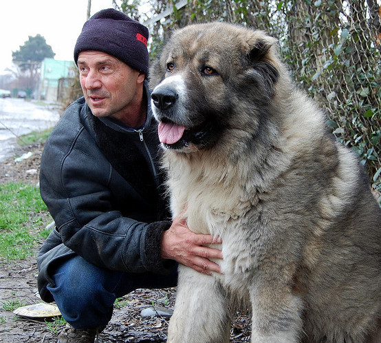 Russian prison dogs - photo#1