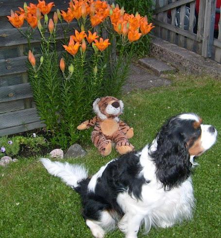 Albin och Tiger njuter i sommarkvällen