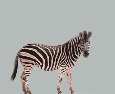 animales-en-cuadros