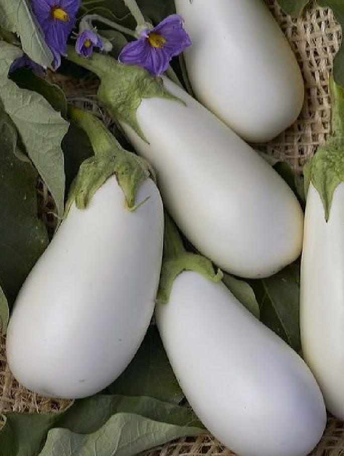 Плоды баклажанов
