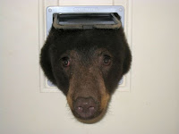 http://www.krem.com/story/news/local/bonner-county/2015/08/14/bear-tries-bust-through-cat-door-schweitzer-condo/31747067/