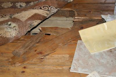 Pudrición blanca en madera.