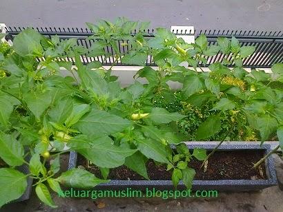 keluarganugraha.blogspot.com