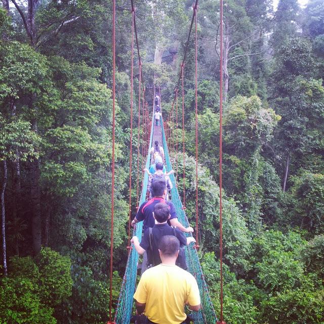 Lembah Danum, Sabah (2013)