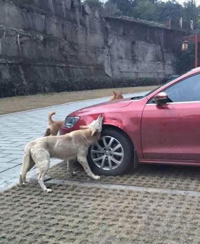 Cão vira-latas é maltratado e o que ele faz depois é impressionante