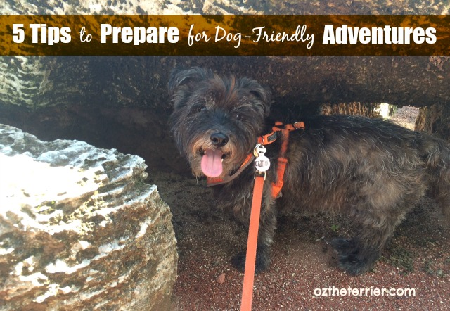 Oz the Terrier shares 5 tips to help you prepare for outdoor adventures with your dog #PinnacelHealthyPets