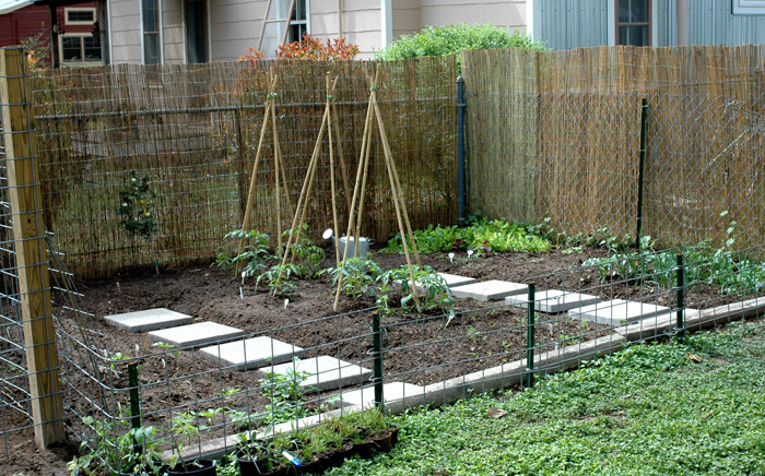 Organic gardening organic vegetable garden basics for Backyard vegetable garden designs