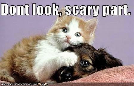 Funny dog and cat pictures