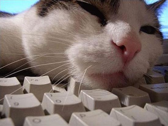 Mengapa Mereka Bosan Baca Blog Anda?