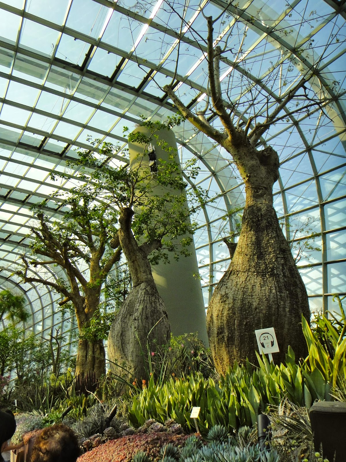 Baobab Trees at Gardens by the Bay