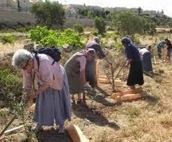 Pokok GHORQOD Yang Sedang Melindungi YAHUDI di Israel