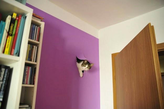 Funny guilty cat