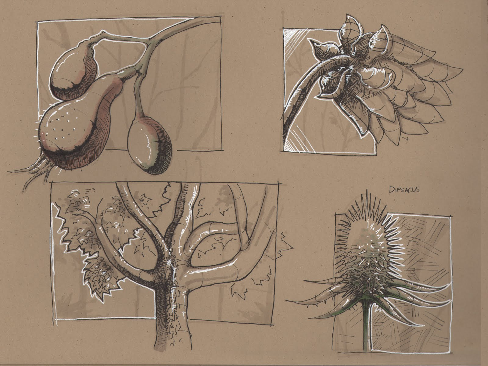 plant studies Moved permanently the document has moved here.