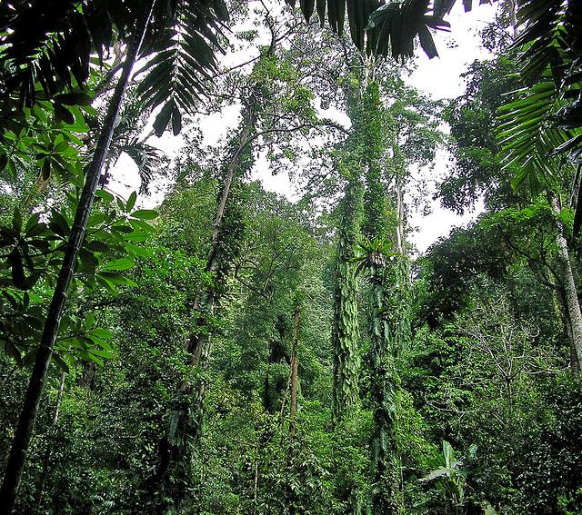 绿油油的丛林