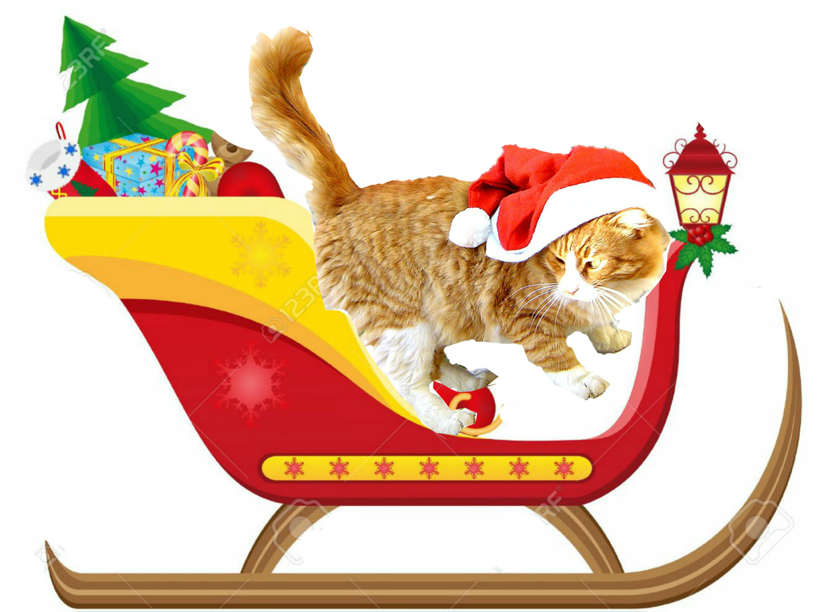 Cretan Cat Steals Santa's Hat!