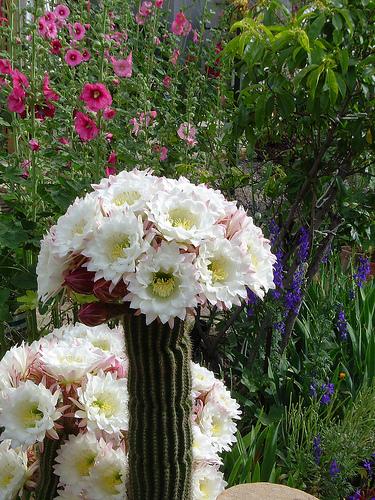 de sus raíces ¡Estos cactus han de contemplarse con ojos críticos
