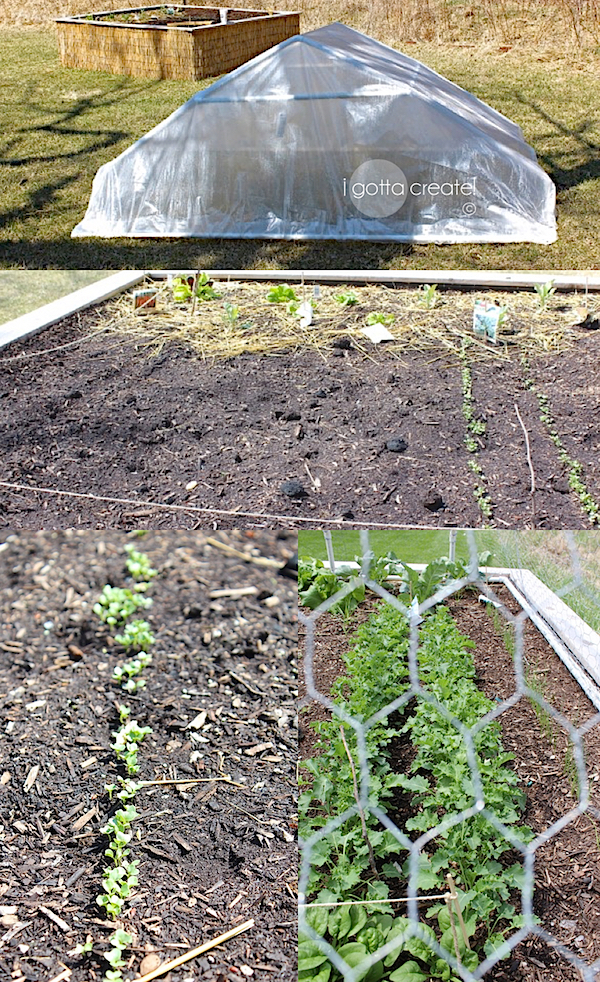 PVC Pipe and chicken wire make a roof for a raised garden bed.   Details at I Gotta Create!