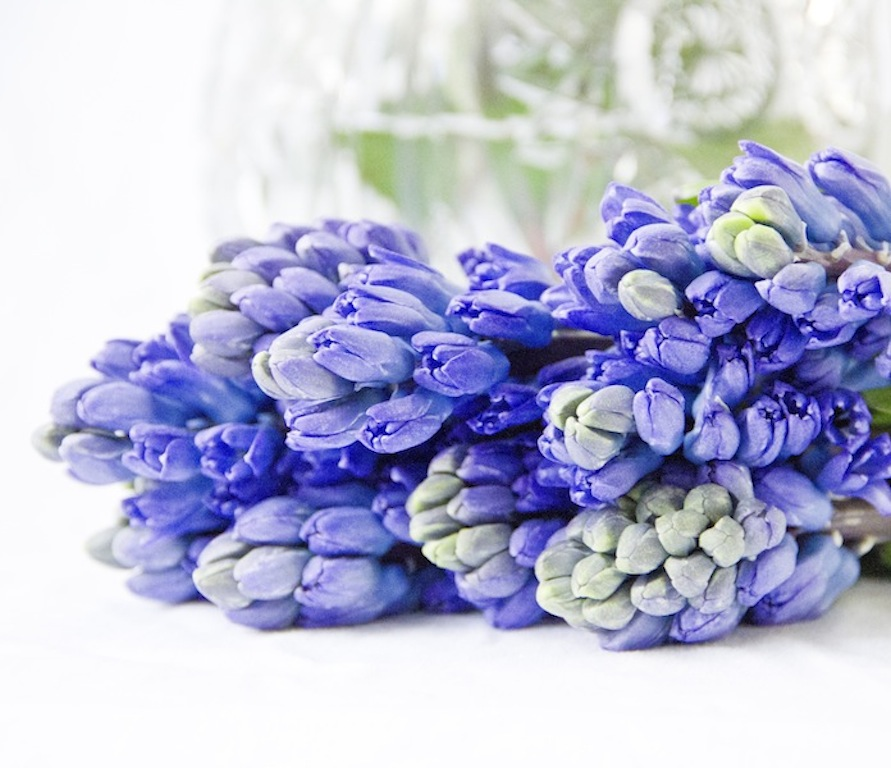 Purple Hyacinths are in the shops now!