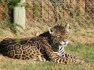 ملف كامل عن اجمل واروع الصور للحيوانات  المفترسة   حيوانات الغابة  860525313_2c5314d413