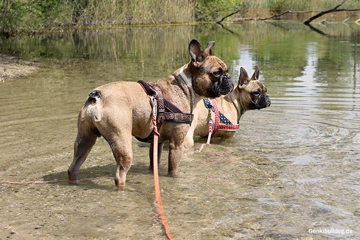 Mit Hund am See