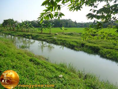 Sungai Ciasem di Kp. Gardu ini mengairi sawah saya