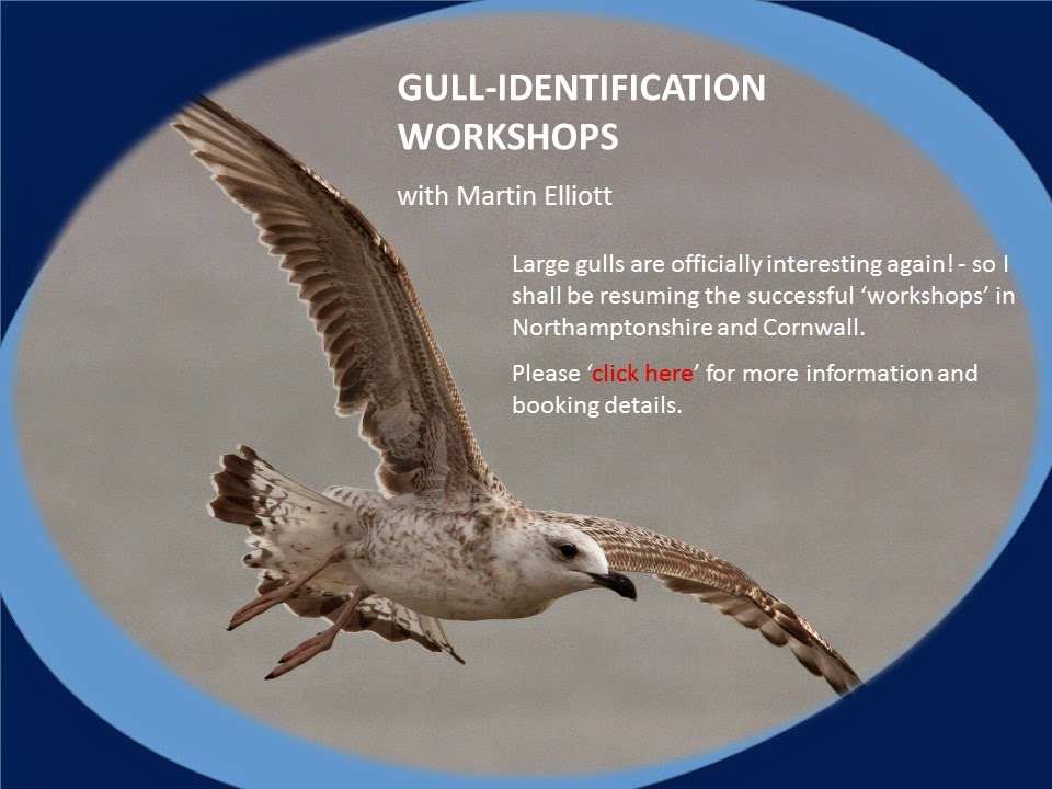 Gull ID Workshop