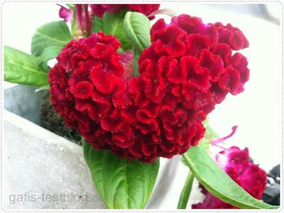 Herz Blumenstock