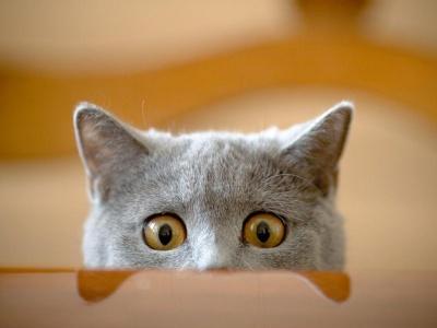 Resultado de imagen para gato curioso