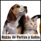 Listado De Razas De Perros Y Gatos