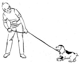 Как производится массовый корм для собак –