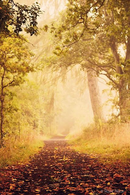 foggy morning in autumn