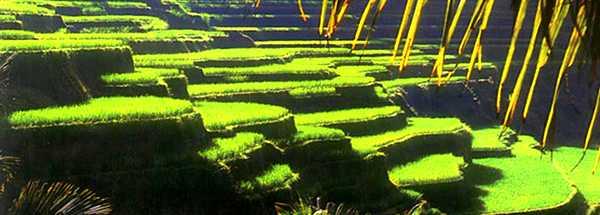 Ubud vacation in Bali