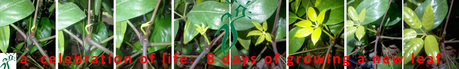 Momentification. A celebration of Life: 8 days of growing a new leaf.