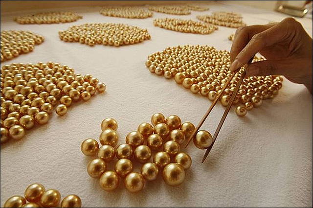 Harvesting The Elusive Golden Pearl In Philippines