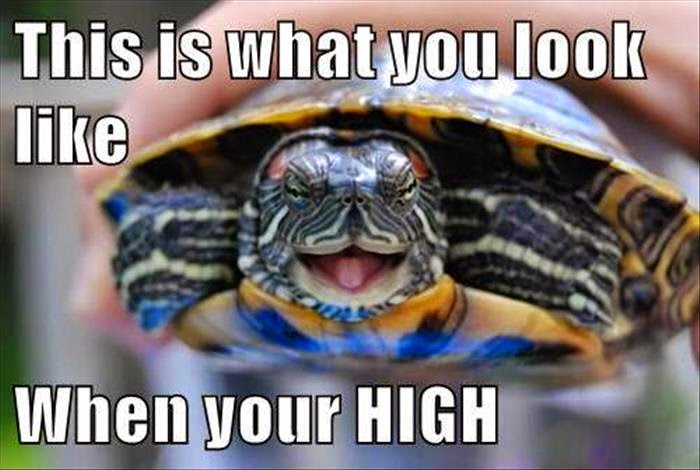 30 Funny animal captions - part 35, funny pictures with captions, animal captions, funny captioned animal photos
