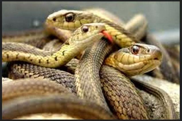 Apresan un tipo con maleta repleta de reptiles