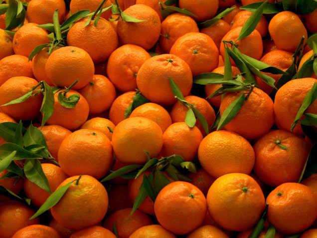 Orange Vegetables And Fruits The gallery for -->...