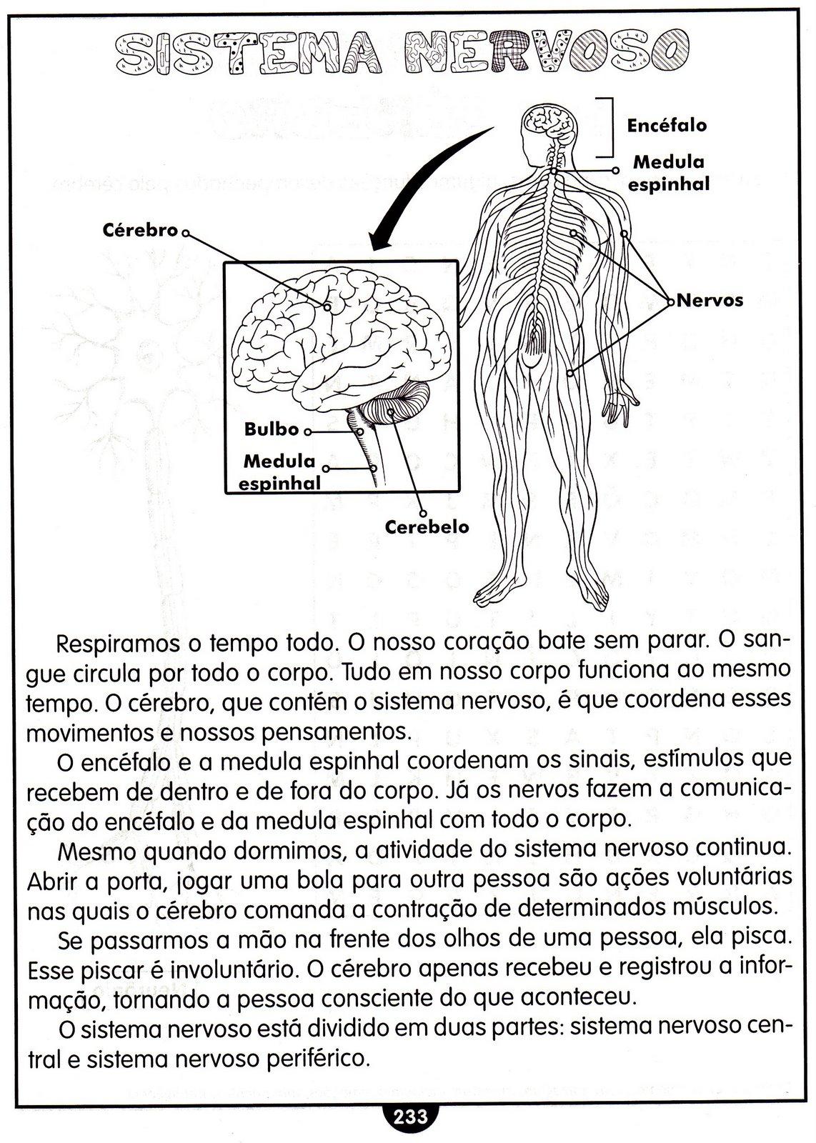 Fabuloso CLUBE DA COR ATIVIDADES ESCOLARES : ATIVIDADES DE CIÊNCIAS SISTEMA  AJ61