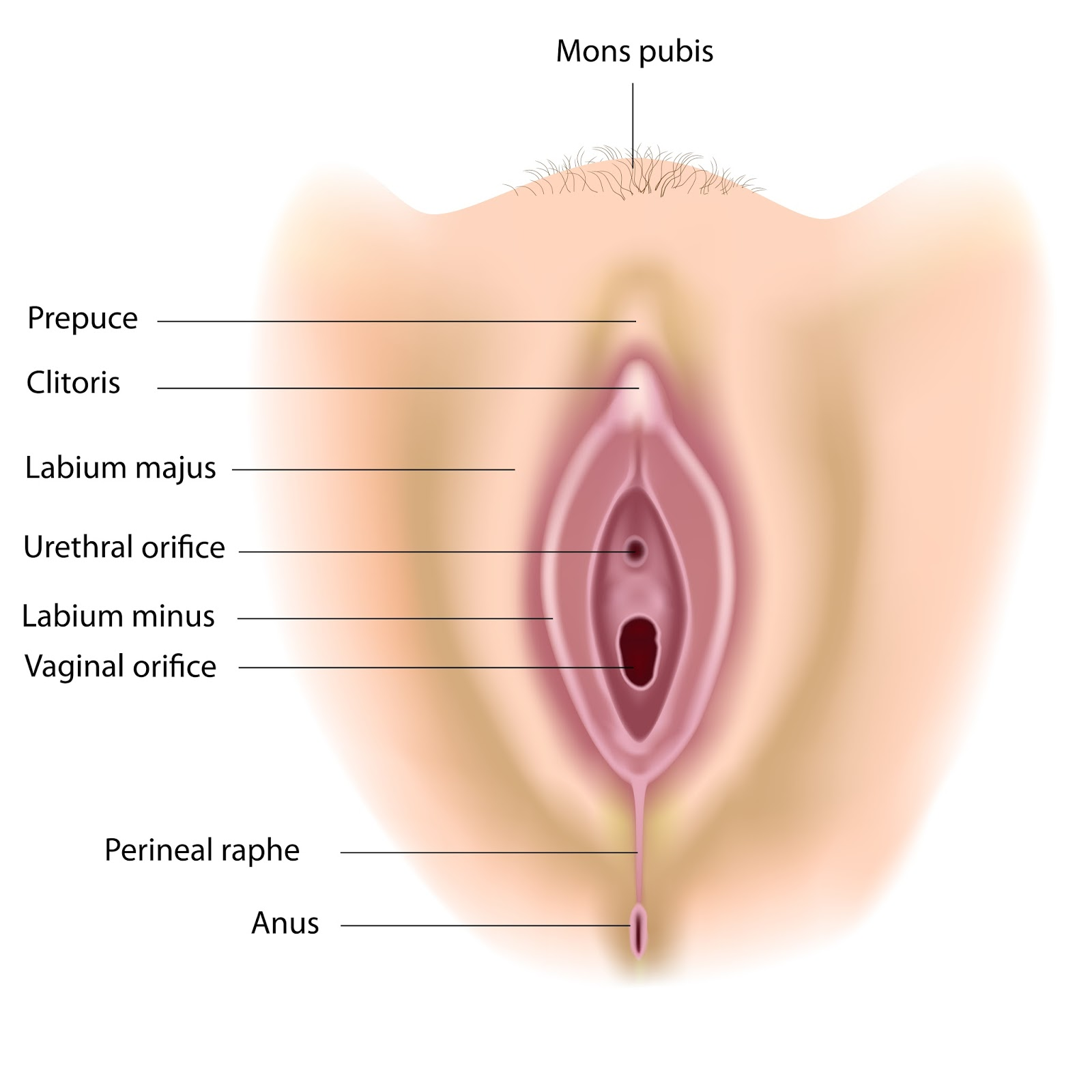 Pre Puberty Breast Buds Quest for health: first period q&a with a ...: http://imgarcade.com/1/pre-puberty-breast-buds/