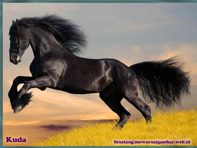 gambar binatang kuda