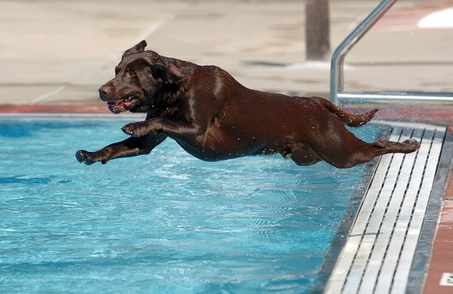 dog jumping pool Dog Swimming Pools