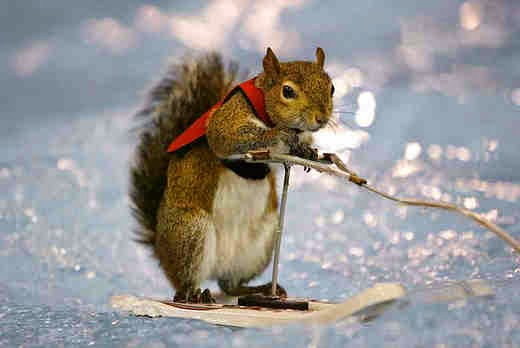 Water-skiing Squirrel - Twiggy
