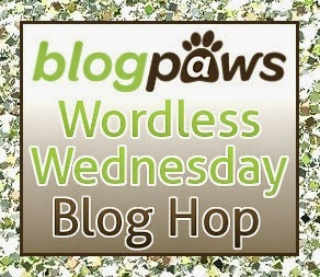 blogpaws.com