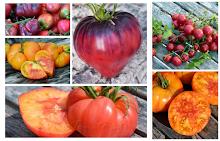 Tomatsesongen 2018