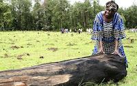 a ativista Wangari Maathai lutou contra o desmatamento no Quênia
