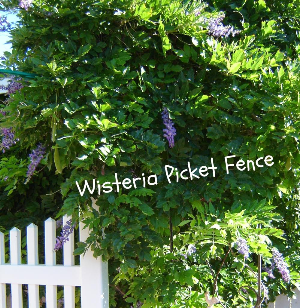 Wisteria Picket Fence