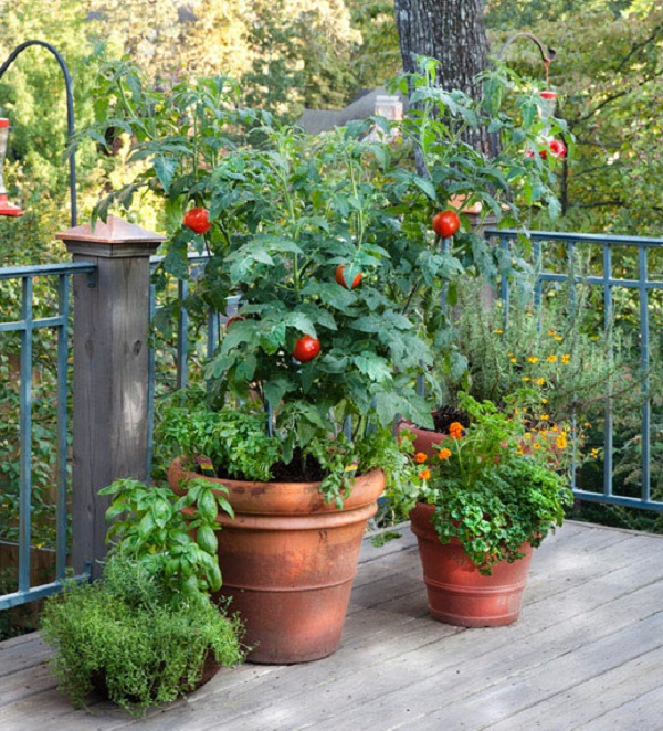 Cultivar tomates en macetas guia de jardin for Huerta de aromaticas en macetas