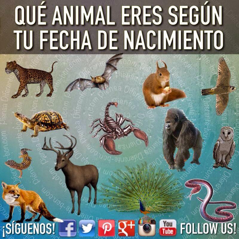 Piensa diferente que animal eres seg n tu fecha de nacimiento - Murcielago en casa significado ...
